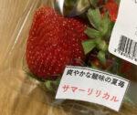 strawberry -summer lyrical-